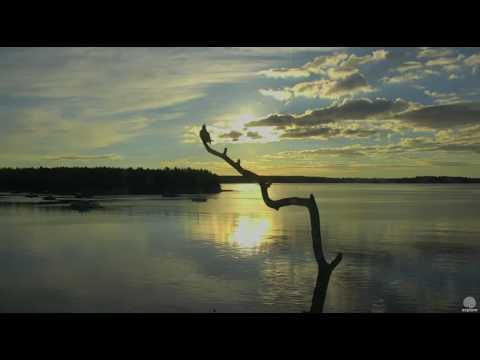 Belted Kingfisher at the Boathouse. Hog Island Ospreys. 07.10 / 24 September 2016