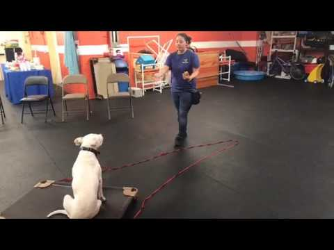 Training | Transitioning from long line to off-leash dog training | Solid K9 Training Dog Training