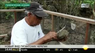 Новый вид черепах обнаружен на Галапагосских островах