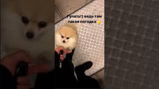 Андрей Черкасов. Гуляем с Моней)))
