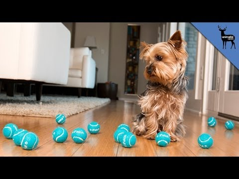 Toys That Will Entertain Your Pets Without You
