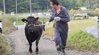 飯舘に牛が戻ってきた 繁殖農家「再開でき励みに」 thumbnail