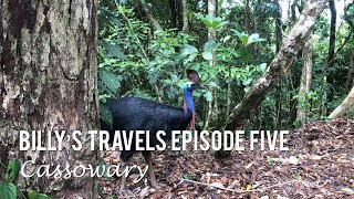Billy's Travels Episode Five: Cassowary