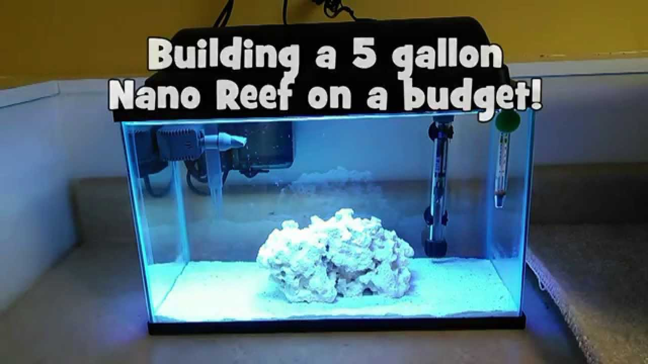 Building a 5 gallon nano reef on a budget youtube for What do u need to build a house