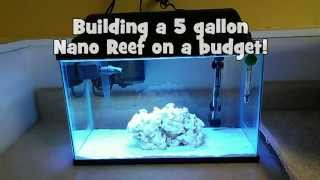 Building a 5 gallon Nano Reef on a budget!