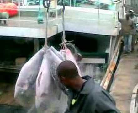 Maersk Line Tuna Stuffing Mombasa