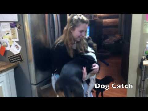 Stunt Dog is Born