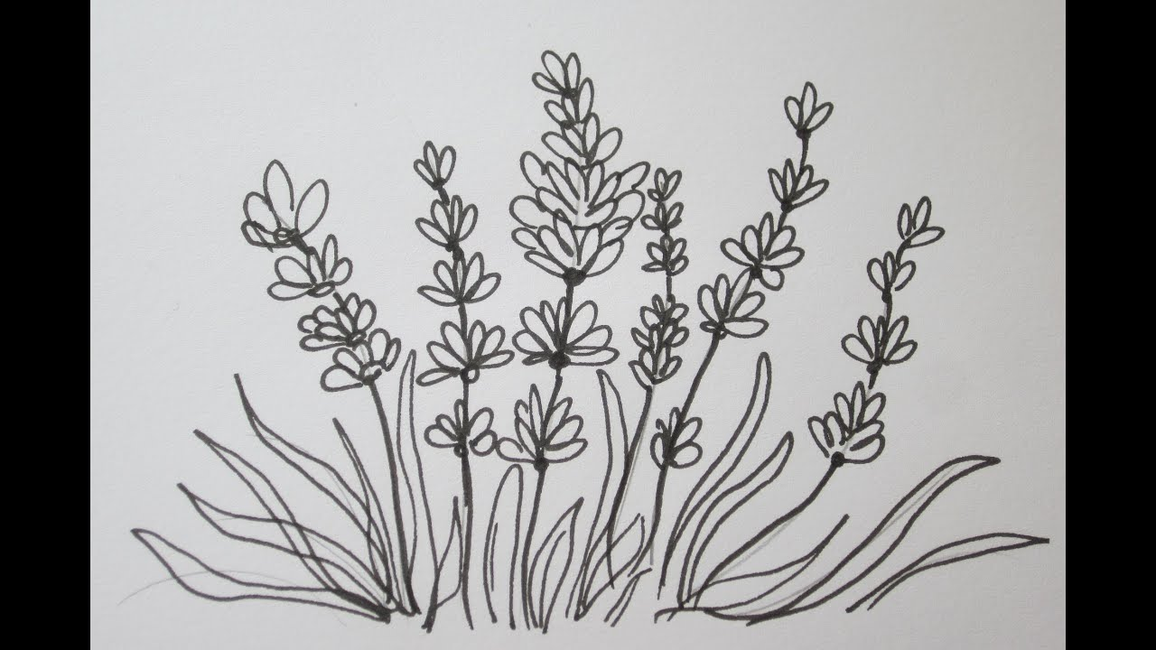 The Easy Way To Draw A Lavender Flower - YouTube
