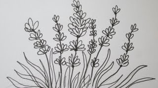 The Easy Way To Draw A Lavender Flower