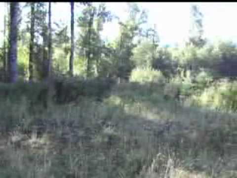 20 acres of land in Ashford, Washington