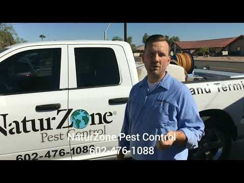 Do Termites Eat Grass?! Phoenix / Scottsdale Termite Control NaturZone Pest Control