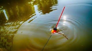 Активный клев карася на утренней зорькеДушевная вышла рыбалкаКарась на поплавок.