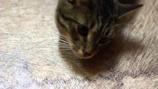 Кошка отвечает на позывы)