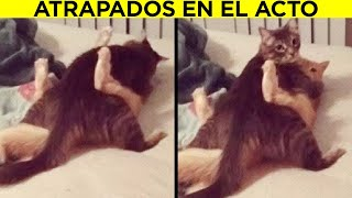 Mascotas Que Casi Le Dan Un INFARTO A Sus Dueños