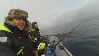 Териберка 2021 Баренцево море Тресковая рыбалка Треска