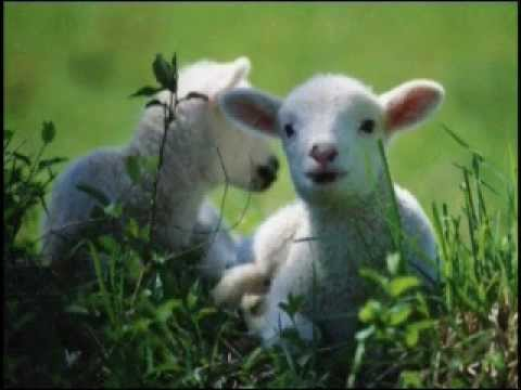 The Lamb, William Blake, song and poem lyrics