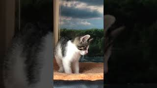 Маленький котенок мальчик Жак 2 мес ищет свой дом в добрые руки