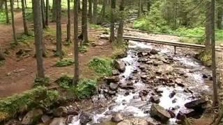 видео Увлекательный тур по Карпатам