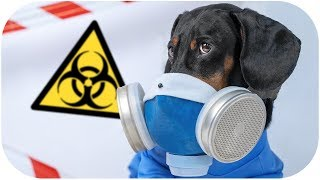 Don't trust your humans Vol. 2! Cute & funny dachshund dog video!