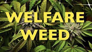 This City Is Giving Away Weed To The Poor