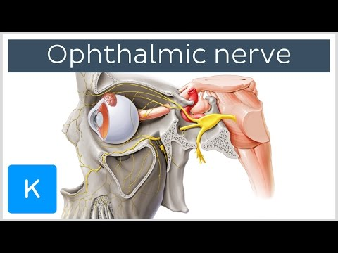 Ophthalmic nerve (preview) - Human Anatomy |Kenhub