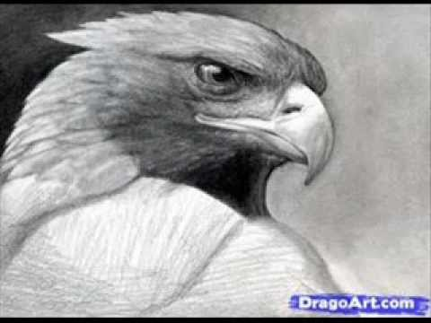 Easy steps to draw eagle