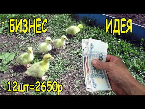 Вопрос: Где купить цыплят?
