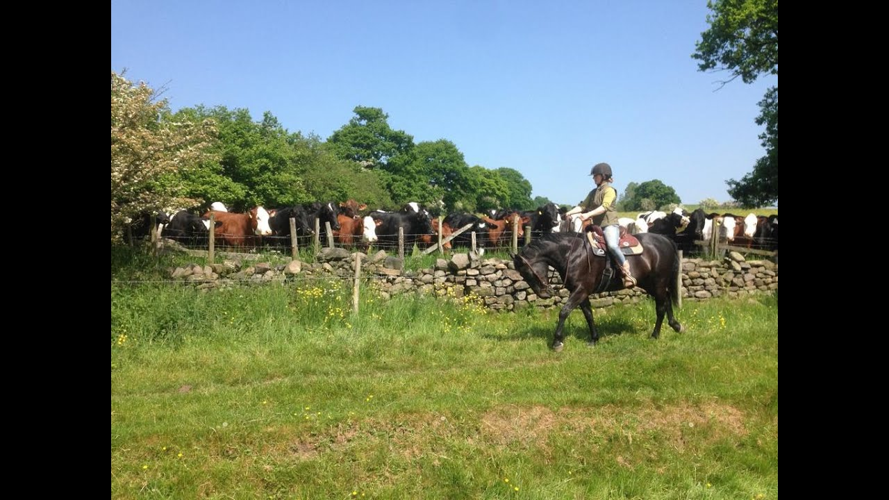 Horse Riding in Yorkshire: The Gate Ride: Part 2: Horrid horseflies and Hello Kevin!!