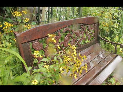 小さな窓の花ごよみ 680 晩夏 雨の庭 ♪ Greensleeves:つのだたかし ♪