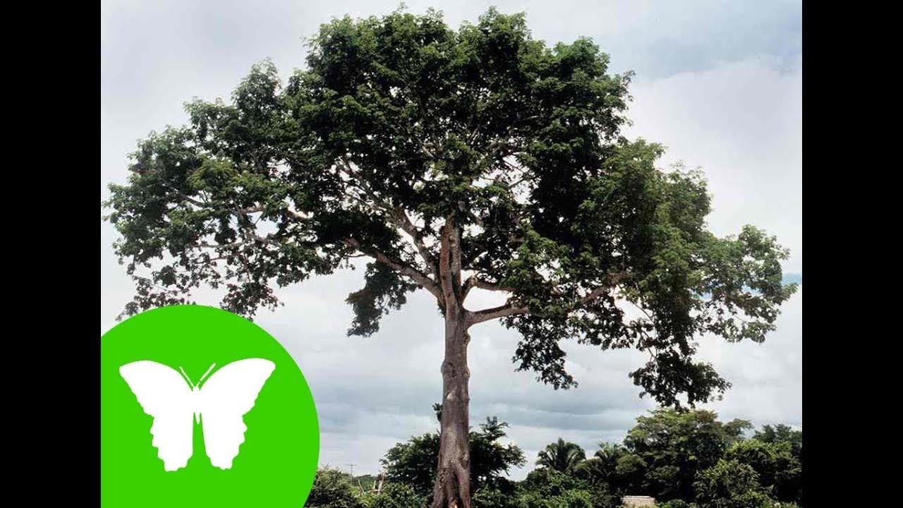 La eduteca las plantas partes de una planta youtube for Arbol con raices y frutos