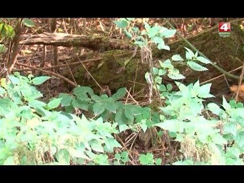 Новости Гродно.В лесу...