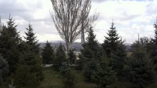 Зеленые красавицы (Армения)
