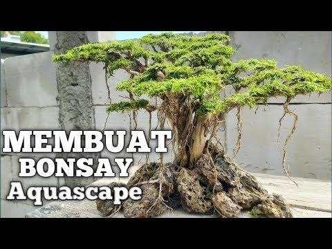 tutorial-membuat-bonsay-aquascape-mudah-vlog#5