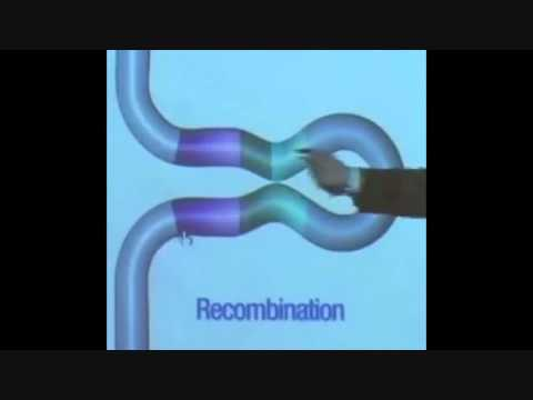 Non reciprocal Y chromosome recombination theory explained