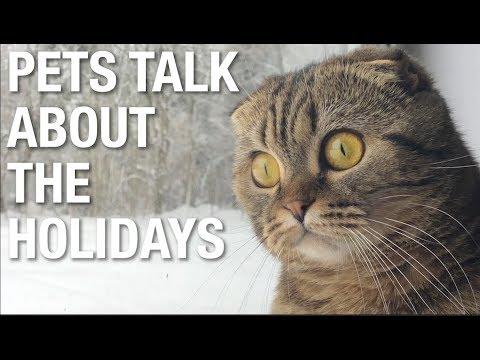 PetsTalk Holidays