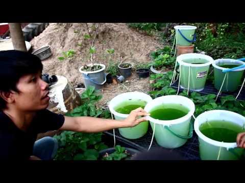 ระบบน้ำหยด DIY BY อาชัย