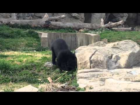 Washington D.C. - National Zoo - Day 1 - Spring Break 2015
