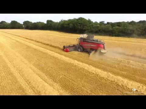 Massey Ferguson delta 9380 AL 2017 harvest of winter barley