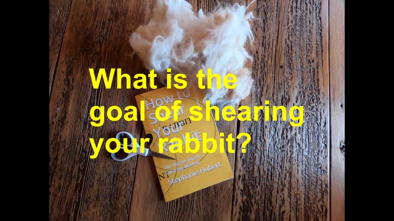 Learn how to shear your rabbit