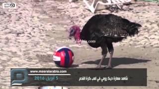 مصر العربية   شاهد مهارة ديك رومي في لعب كرة القدم