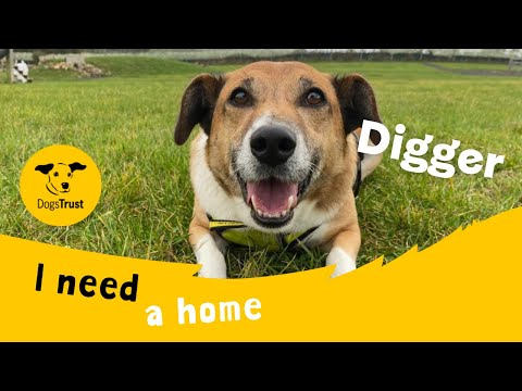 Digger Is An Energetic Terrier Cross Dogs Trust Leeds Youtube