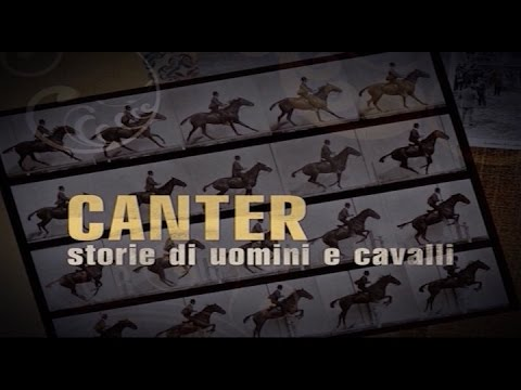 CANTER (03/11/16)
