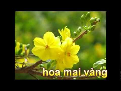 Giúp trẻ nhận biết các loài hoa.mpg