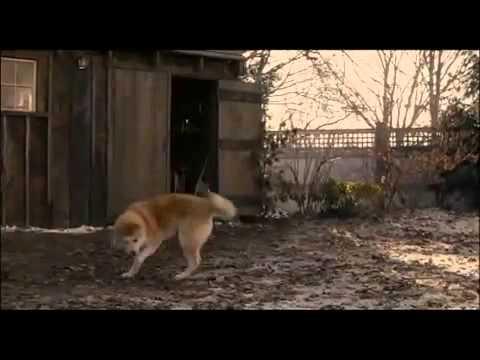 Đoạn phim cảm động đến rơi nước mắt về sự trung thàng của chú chó Hachiko