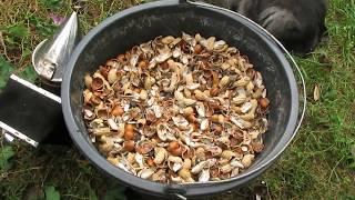 видео Топливо для дымаря (гнилушки 1 кг) - Магазин - Пчеловодство. Купить ульи. Продажа ульев. Цена на ульи