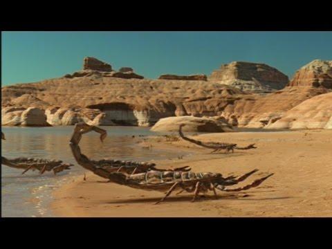 El Escorpión Más Grande Del Planeta