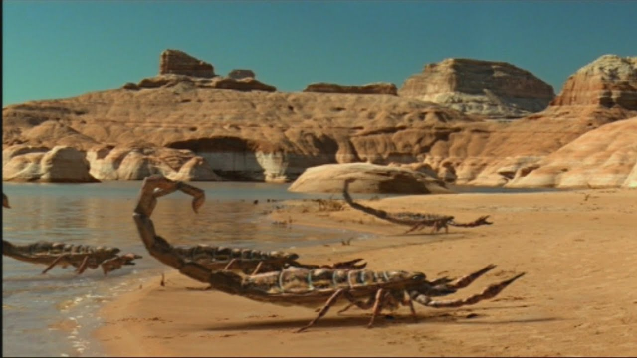 Biggest scorpion in the world - photo#35
