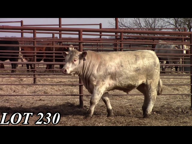 Mead Angus Farms Lot 230
