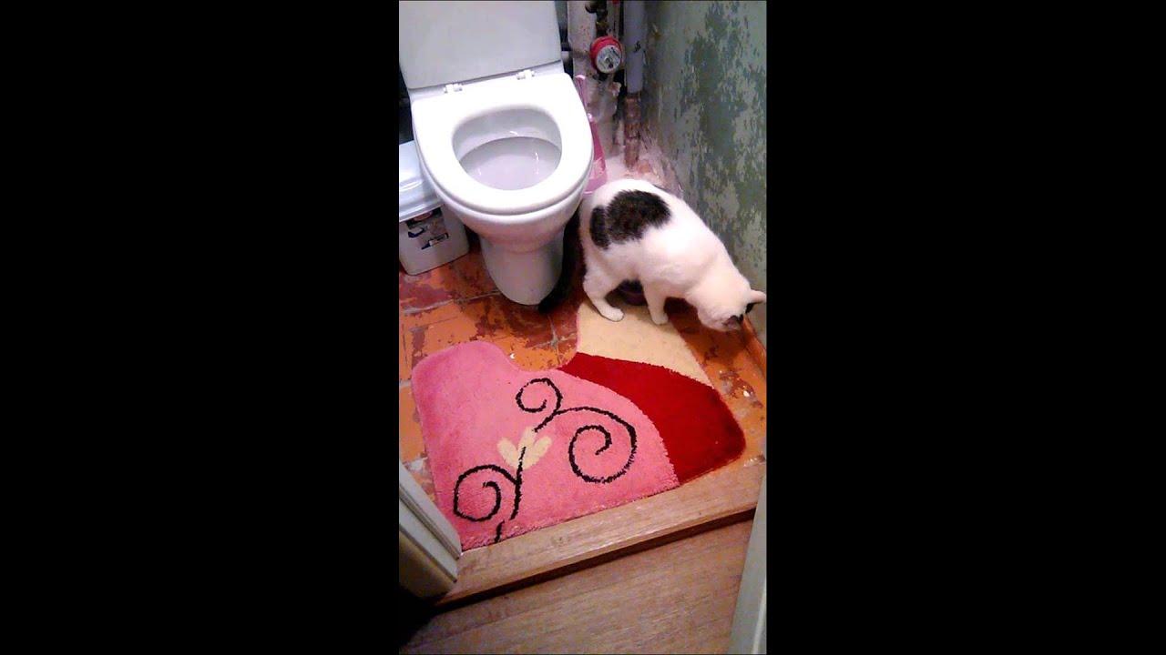 Как коты дома писают