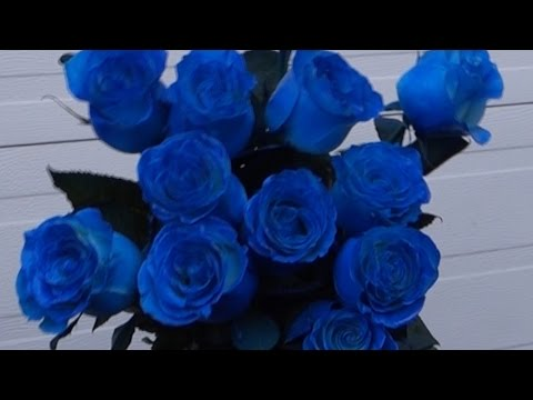 Как покрасить розу в синий цвет